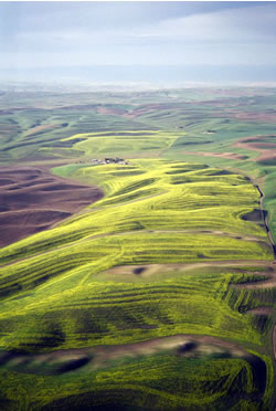 This is an image of Canola contours.