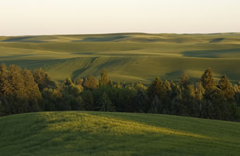 Cropping systems on the Palouse