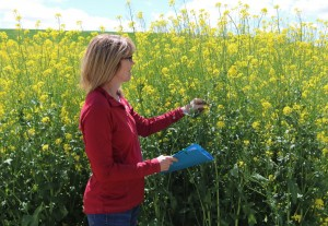 Vicki McCracken in a canola field.